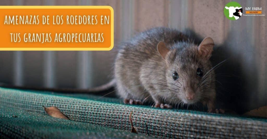 control de roedores en granjas agropecuarias