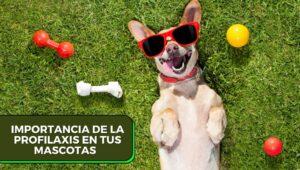 profilaxis en perros